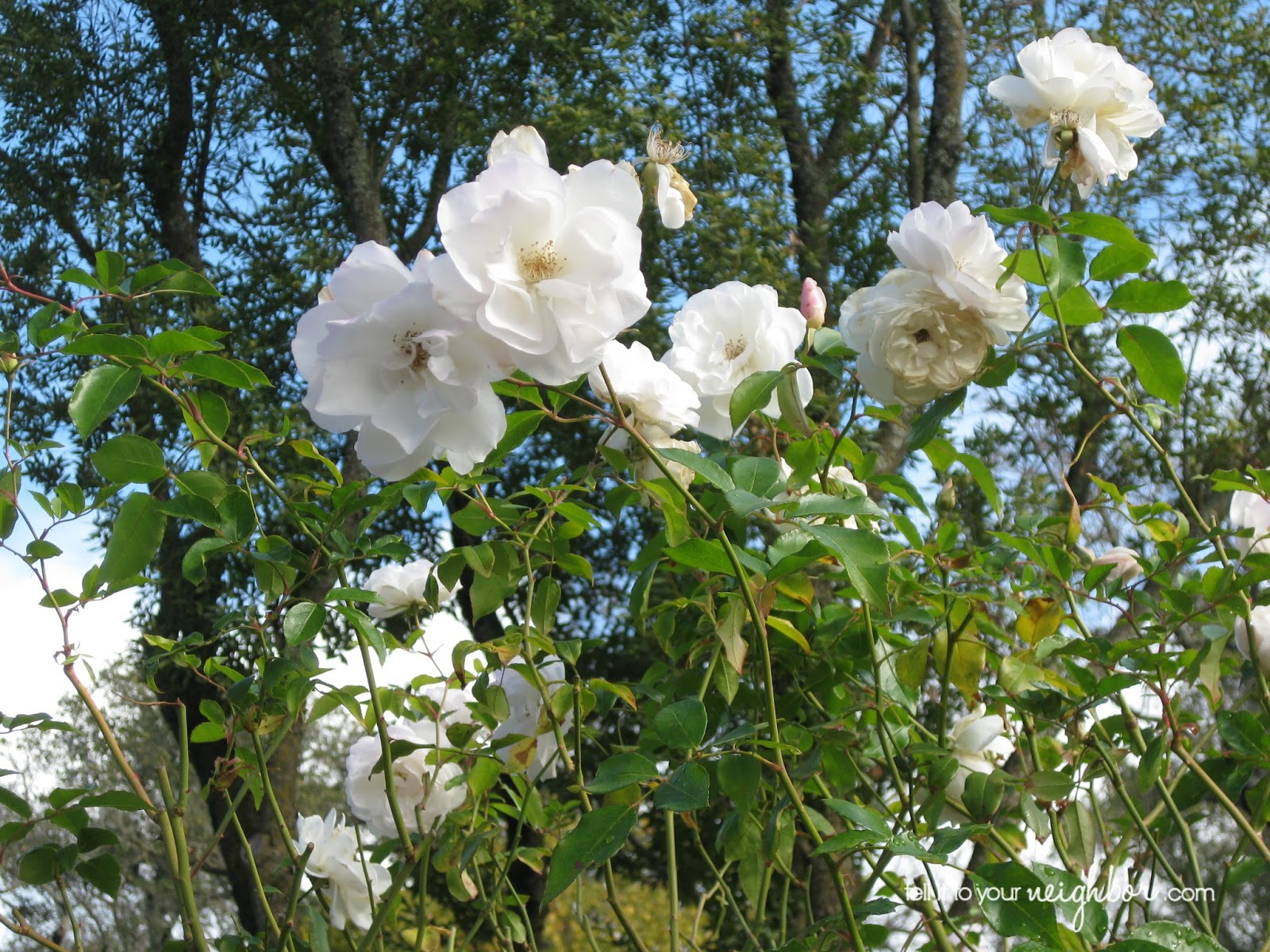 Itu0027s A Garden Of Mostly White Flowers And Also Plants With Shimmery Leaves  That Glow At Night When The Moon Is Out. I Love The Idea Of A Moon Garden,  ...